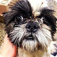 Adopt A Pet :: Detriot - Chicago, IL