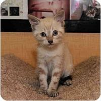 Adopt A Pet :: Bolt - Farmingdale, NY