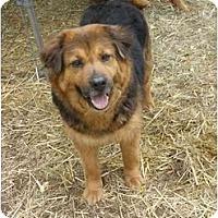 Adopt A Pet :: Meg - New Boston, NH