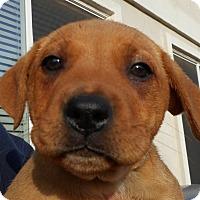 Adopt A Pet :: Baby Kisses - Oakley, CA