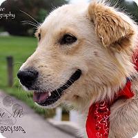 Adopt A Pet :: Beretta - Cincinnati, OH