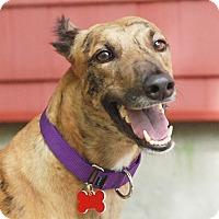 Adopt A Pet :: PatC - Ware, MA