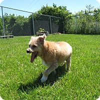 Adopt A Pet :: Gingerale - Port Clinton, OH