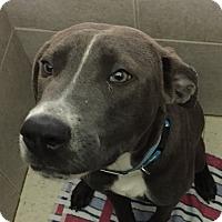 Adopt A Pet :: Skippy - Philadelphia, PA