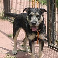 Adopt A Pet :: Boo - Spring, TX