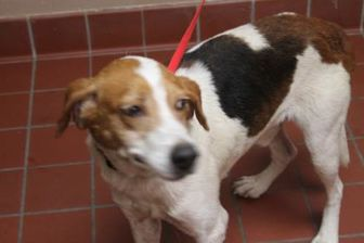 Hound (Unknown Type) Mix Dog for adoption in Daytona Beach, Florida - Rodney