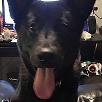 Adopt A Pet :: Luna - River Falls, WI