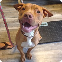 Adopt A Pet :: Hulk - Lagrange, IN