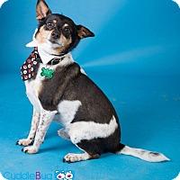 Adopt A Pet :: Miles - Sudbury, MA