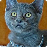 Adopt A Pet :: Dainty - Antioch, CA