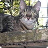 Adopt A Pet :: Pamela - Riverside, RI