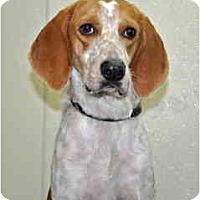 Adopt A Pet :: Flash - Port Washington, NY