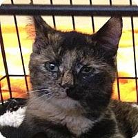 Adopt A Pet :: Trixie - Denton, TX