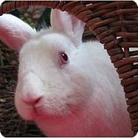 Adopt A Pet :: Sparky - Huntsville, AL