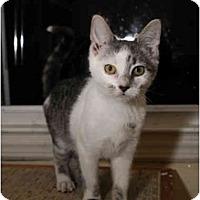 Adopt A Pet :: Mars - Farmingdale, NY