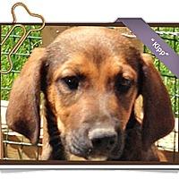 Adopt A Pet :: Kipp - Portland, OR