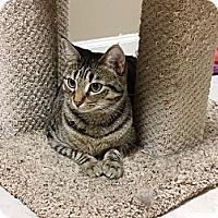 Adopt A Pet :: Debra - Marietta, GA