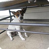 Adopt A Pet :: Turbo - Cincinnati, OH