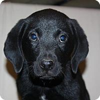 Adopt A Pet :: Albert - PENDING, in Maine - kennebunkport, ME