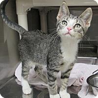 Adopt A Pet :: Boo - Athens, GA