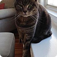 Adopt A Pet :: Ellie Mo - N. Billerica, MA