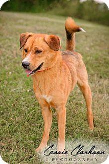 Border Collie Mix Dog for adoption in Zanesville, Ohio - Pretty Boy - RESCUED!