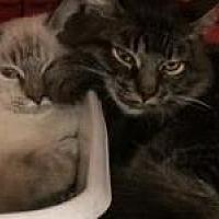 Adopt A Pet :: Carlson - Chino, CA
