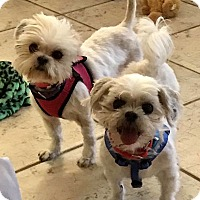 Adopt A Pet :: Gabby & Pebbles - Ft. Lauderdale, FL