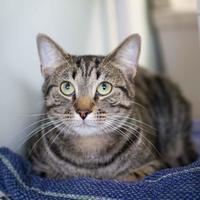 Adopt A Pet :: Clarkson - Batavia, OH