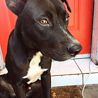 Adopt A Pet :: Sinbad - Ocean Ridge, FL