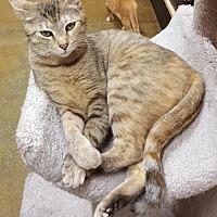 Adopt A Pet :: Beth Smith170988 - Atlanta, GA