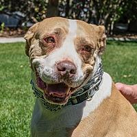 Adopt A Pet :: Daisy - Gardnerville, NV