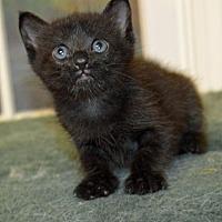 Adopt A Pet :: Linc - Alpharetta, GA