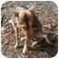 Photo 4 - German Shepherd Dog/Siberian Husky Mix Dog for adoption in Oak Ridge, New Jersey - Harmony