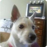 Adopt A Pet :: Princess - Maple Park, IL