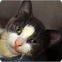 Adopt A Pet :: Bella - Oxford, CT