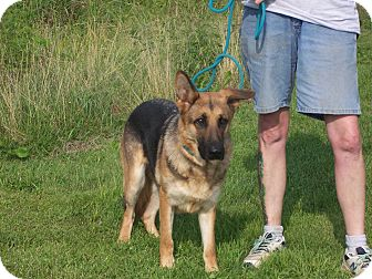 German Shepherd Dog Dog for adoption in Tully, New York - CARRIE