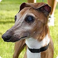Adopt A Pet :: Slim in Humble - Argyle, TX