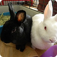 Adopt A Pet :: Corona - Portland, ME