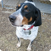 Adopt A Pet :: Clyde - Geneseo, IL