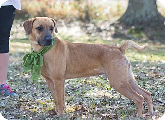 Hound (Unknown Type) Mix Dog for adoption in Glastonbury, Connecticut - Norah