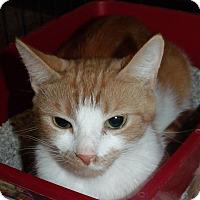 Adopt A Pet :: Zena-ADOPTED - Somerset, KY
