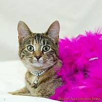 Adopt A Pet :: Princess - Little Rock, AR