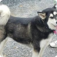 Adopt A Pet :: Niska - Bristol, VA