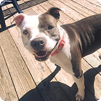 Adopt A Pet :: Hannah - Concord, CA