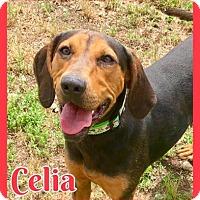 Hound (Unknown Type) Mix Dog for adoption in Jasper, Indiana - Celia