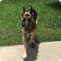 Adopt A Pet :: Nora Adoption Pending - Houston, TX