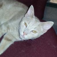 Adopt A Pet :: Khaki - Greensboro, NC