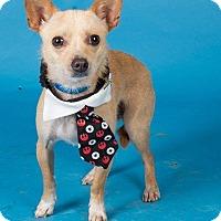 Adopt A Pet :: Max - Sudbury, MA