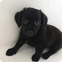 Adopt A Pet :: FORK-ADOPTED - East Windsor, CT